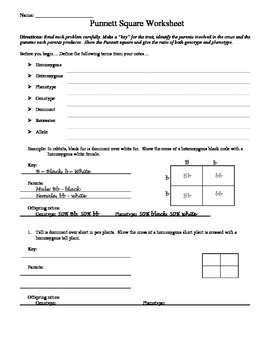 Square Worksheet 1 Answer Key - Delibertad