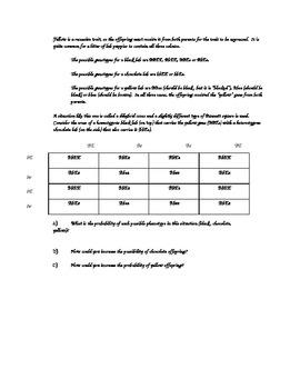 Punnett Squares worksheet