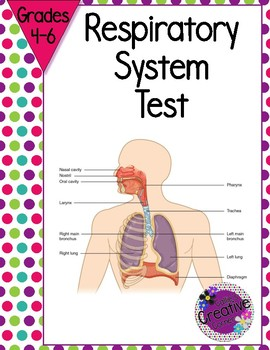 Respiratory System Test