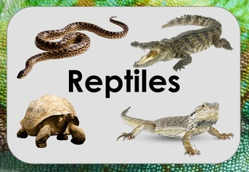 R is for Reptiles