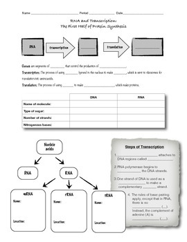 Printables Transcription And Translation Activity Worksheet rna and transcription worksheet or guided notes by d meister notes