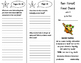Rain Forest Food Chains Trifold - ReadyGen 5th Grade Unit