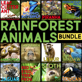 Rainforest Animals: Informational Article, QR Code Researc