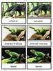Rainforest--Animals of South America Montessori 3-part cards