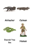 Rainforest Cards