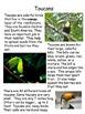 Rainforest Nonfiction Close Read Unit- Differentiated Text
