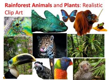 Rainforest Plants and Animals: Realistic Commercial Clip Art