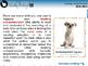 Reading Comprehension: Main Idea - NOTEBOOK Gr. 3-8