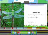 Reading - Dragonflies