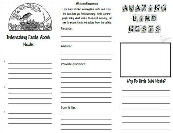 Reading Street 3rd grade Unit Week 5  Amazing Bird Nests Brochure