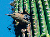 "Reading Street ""Amazing Bird Nests"" Weekly PowerPoint"
