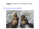 Reading a-z Seals, Sea Lions, and Walruses Level P