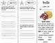 ReadyGen 5th Grade Unit 1 Trifolds Bundle