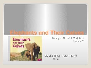 ReadyGen First Grade Unit 1 Module B Lesson 7 Elephants an