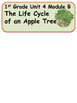 ReadyGen The Life Cycle of an Apple Tree Vocabulary 1st Gr