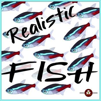 Realistic Fish Clip Art Illustrations
