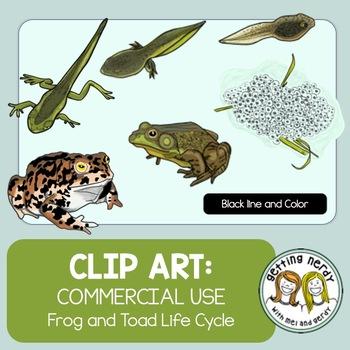 Frog Life Cycle - Clip Art