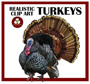 Realistic Turkey Clip Art Illustrations