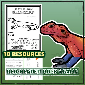 Red-Headed Rock Agama -- 10 Resources -- Coloring Pages, R