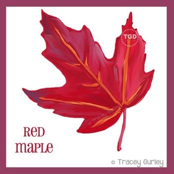 Red Maple Leaf - autumn leaf clip art Printable Tracey Gur