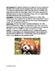 Red Panda - informational article lesson facts questions v