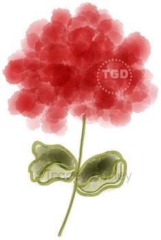 Red Watercolor Geranium, geranium clip art, Printable Trac