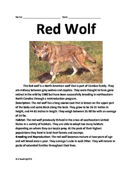 Red Wolf - Review Article Information Facts Questions Vocabulary