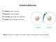 Reduction-Oxidation (Redox) Reaction Explained (Presentati