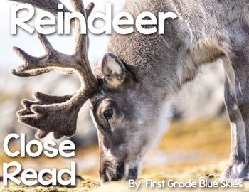 Reindeer Close Read