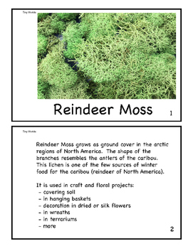 Reindeer Moss Mini Book - Imaged by the Scanning Electron