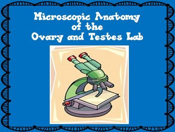 Reproductive System - Microscopic Anatomy of the Ovary and