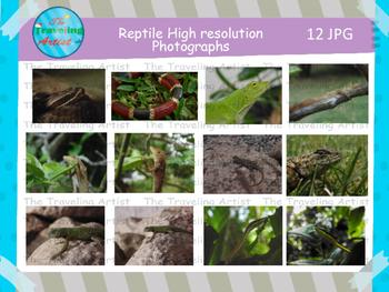 Reptile Photographs Set 2