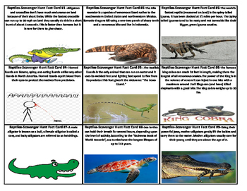 Reptile and Amphibians Scavenger Hunt