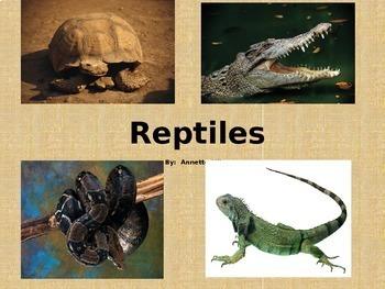 Reptiles Powerpoint