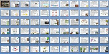 Reptiles Birds Smartboard Notebook Presentation Lesson Plan