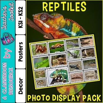 Reptiles Photo Poster Display Pack {UK Teaching Resource}