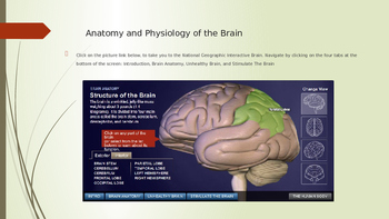 Resource PowerPoint for Psychology or Anatomy: Neurons, Ne