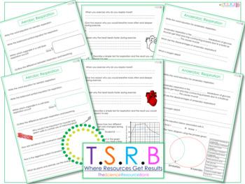 Respiration Questions/Worksheet