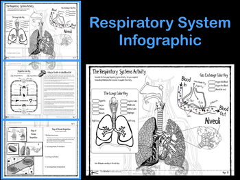 Respiratory System Infographic