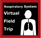 Respiratory System / Lung Virtual Field Trip