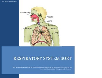 Respiratory System Sort