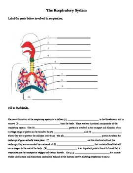 Worksheets Respiratory System Labeling Worksheet Answers respiratory system labeling and cloze worksheet by jer teachers worksheet