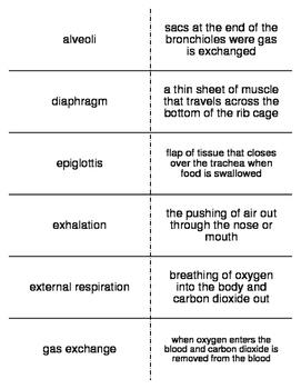 Respiratory and Excretory System Vocab. Flash Cards for Mi
