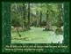 Revolutionary War PowerPoint Series-Swamp Fox, Francis Marion