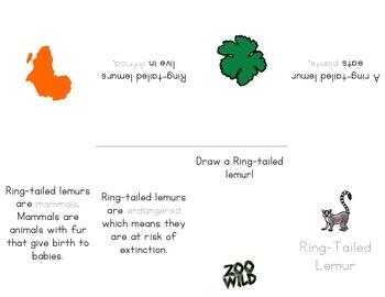 Ring Tailed Lemur -- Little Book Foldable -- Homeschool or