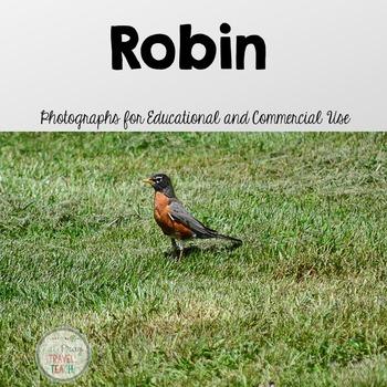 Robin Stock Photos