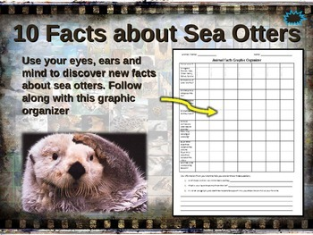 SEA OTTER: 10 facts. Fun, engaging PPT (w links & free gra