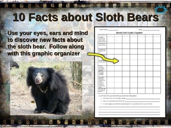 SLOTH BEAR: 10 facts, engaging PPT, links, free graphic or