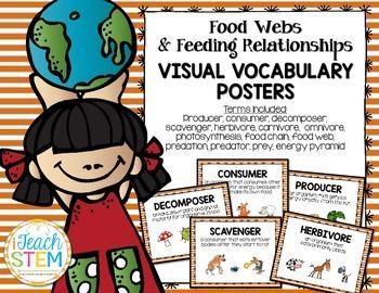 STEM Ecosystem Food Webs & Feeding Relationships Vocabular