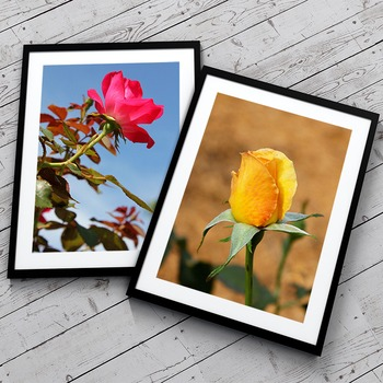 STOCK PHOTOS: 10 Flowers Themed Photos [Personal & Commerc